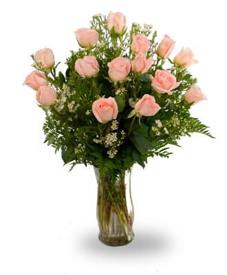 Quinze Roses  Couleur de Pêche
