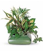 Petit Arrangement de Plantes